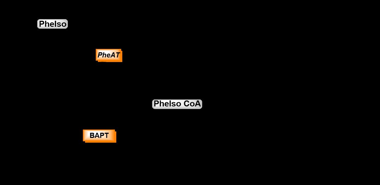 3-step biocatalysis